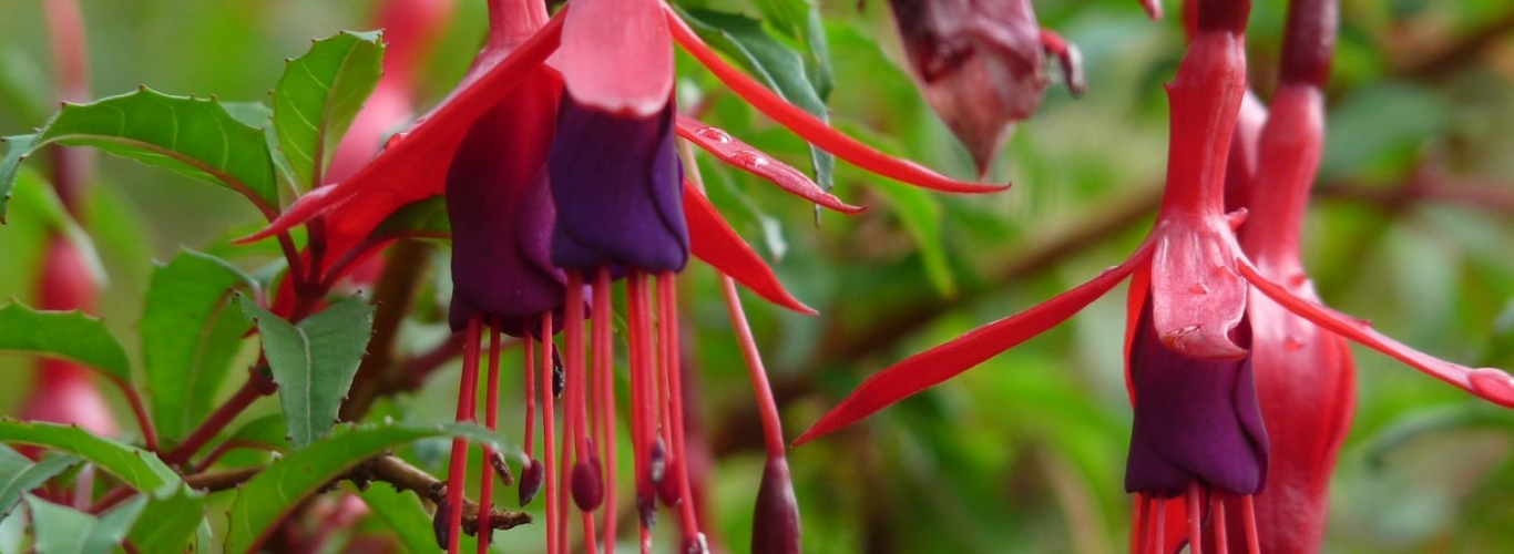 fuchsia Condor Travels
